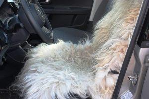 Kleed ligt warm en uitnodigend in de auto.